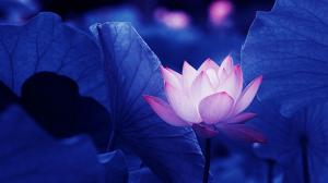 Photo of bluewaterlily